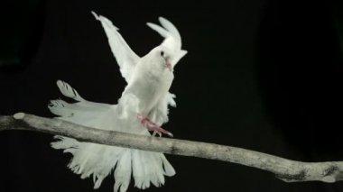 Bird landing on branch — Stock Video