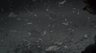 Light bulb falling and crashing — Stock Video