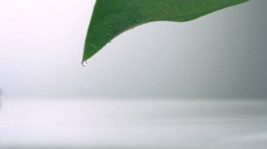 Droplet falling off leaf — Stock Video