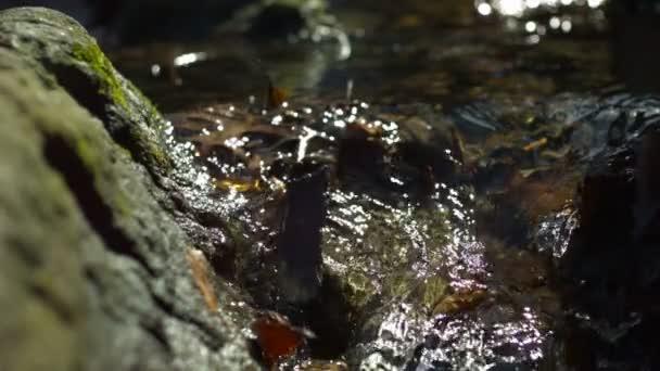 Agua que fluye en el arroyo — Vídeo de stock