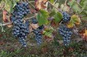 Wine specialist — Foto de Stock