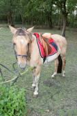 Pferd in aktion — Stockfoto
