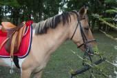 Bel cavallo — Foto Stock