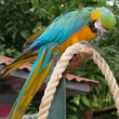Colourful parrot bird sitting on the perch — Stock Photo #79052852