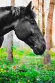Horse eating grass in the forest, shallow DOF, focus on eyes — Stock Photo