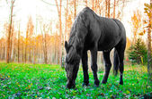 Horse eating grass in the forest, shallow DOF focus on eyes — Stockfoto