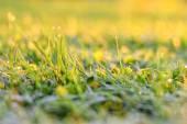 Summer grass — Stock Photo