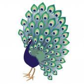 Decorative peacock — Stock Vector