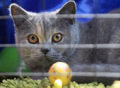 Grey cat in a cage — Stock Photo