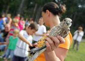 Young kestrel in the hand of an environmentalist. — Stock Photo
