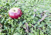 Red apple over grass — Stock Photo