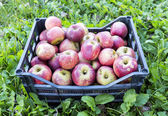 Crate of apples over grass — Stock Photo