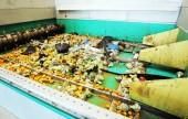 Organic waste plant — Stock Photo