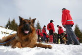 Mountain Rescue Service Red Cross dog — Stock Photo