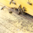 Honey bees in yellow beehive — Stockfoto #70746825
