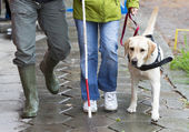 Blind person with her guide dog — Stock Photo