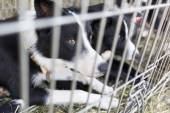 Homeless dogs in cages — Stock Photo