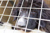 Ownerless dog in a cage — Stock Photo