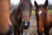 Divocí koně detail — Stock fotografie