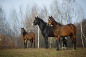 Horses on the meadow — Stock Photo
