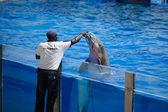 Dolphins show in Palma de Mallorca — Fotografia Stock