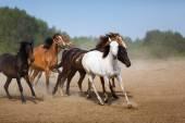 Herd of running horses — Stock Photo