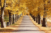 Autumn avenue — Stock Photo