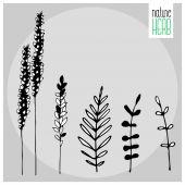 Vector nature herb — Stock Vector