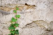 Ivy crawling up a stone wall — Stock Photo
