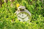 Old fashioned clock on a meadow — Photo