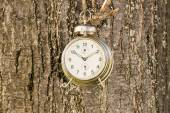 Old fashioned clock hanged on a tree — Stock Photo