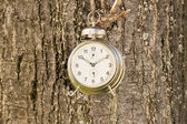 Old fashioned clock hanged on a tree — Foto de Stock