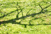 Withered tree shade over a green meadow — Stock Photo