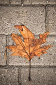Withered leaf over concrete blocks — Stock Photo