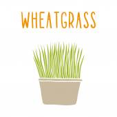 Wheatgrass. — Stock Vector