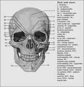 Human anatomy — Stock Vector