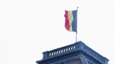 Flag of Belgium waving in wind — Stock Video