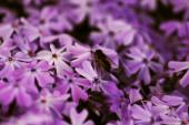 Pollination — Stock Photo