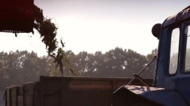 Harvesting beet — Stock Video
