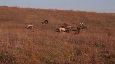 Horse pasture — Stock Video