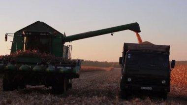 Loading harvest — Stock Video