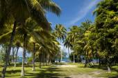 Beach on the tropical island. Clear blue water, sand and palm trees in Tahiti. — Stock Photo