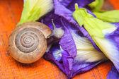 Snail eating purple flower — Стоковое фото