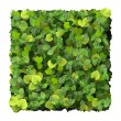 Square, quadrangle made from green leaves isolated on white background. 3D render. — Stock Photo #69300737