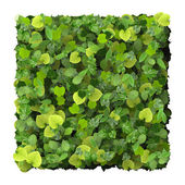 Square, quadrangle made from green leaves isolated on white background. 3D render. — Foto de Stock