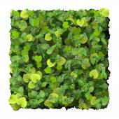 Square, quadrangle made from green leaves isolated on white background. 3D render. — Stock fotografie