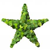 Star or sun made from green leaves. — Stock Photo
