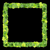 Square, quadrangle made from green leaves isolated on white background. 3D render. — Stock Photo