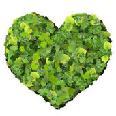 Playing card eco icon heart, made from green leaves isolated on white background. 3D render. — Stock Photo