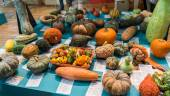 Various Pumpkins — Stock Photo